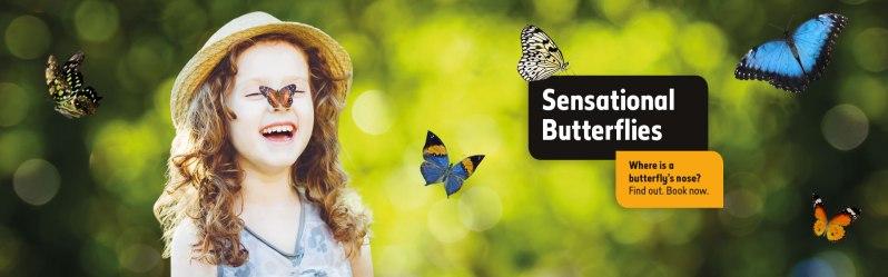 butterflies-2017-nose-question-hero-desktop.jpg